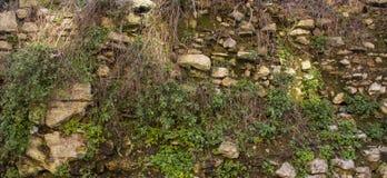 Vecchia parete verde La struttura delle pietre su cui l'erba si sviluppa immagini stock libere da diritti