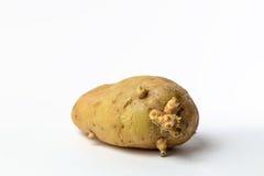 Vecchia patata Fotografie Stock Libere da Diritti