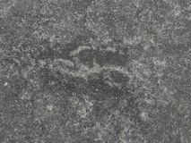 Vecchia pavimentazione in calcestruzzo Fotografia Stock Libera da Diritti