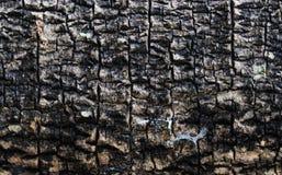 Vecchia pelle dell'albero fotografie stock libere da diritti