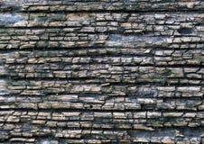 Vecchia pelle dell'albero immagine stock