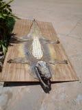 Vecchia pelle dell'alligatore Fotografie Stock