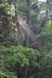 Vecchia pioggia mista della foresta appena dopo Fotografia Stock