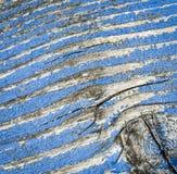 Vecchia pittura blu-chiaro su legno Immagine Stock Libera da Diritti