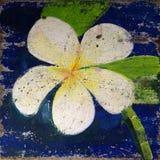 Vecchia pittura del fiore di plumeria Fotografie Stock