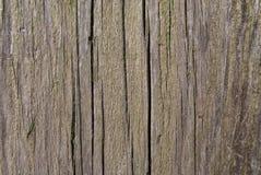 Vecchia pittura verde sull'albero Immagine Stock