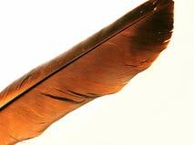 Vecchia piuma della colomba Fotografie Stock