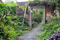 Vecchia porta con i rampicanti invasi Fotografie Stock