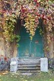 Vecchia porta di legno nella casa, uva selvaggia attorcigliata Fotografia Stock Libera da Diritti