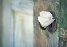 Vecchia porta di legno verde con una rosa bianca Fotografie Stock