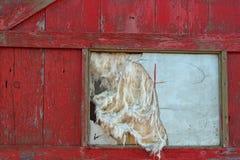 Vecchia porta e finestra rotta Fotografia Stock Libera da Diritti