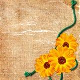 Vecchia priorità bassa del grunge con il fiore e la corda Immagine Stock Libera da Diritti