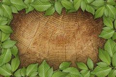 Vecchia priorità bassa di legno con il blocco per grafici floreale verde Immagini Stock Libere da Diritti
