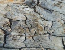 Vecchia priorità bassa di legno di struttura Fotografia Stock Libera da Diritti