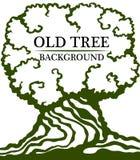 Vecchia priorità bassa di legno Immagine di grande tronco e di una corona densa di vecchio albero illustrazione di stock
