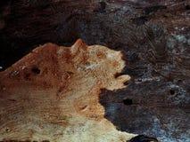 Vecchia priorità bassa di legno Struttura di uso del legno della corteccia come sfondo naturale fotografia stock libera da diritti