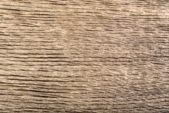 Vecchia quercia di legno unica della palude con il graffio fantastico e la linea arancio Fotografia Stock Libera da Diritti