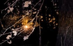 Vecchia ragnatela insolita al tramonto con le foglie asciutte immagine stock