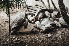Vecchia razza delle tartarughe, lo zoo fotografia stock