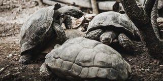 Vecchia razza delle tartarughe, lo zoo fotografie stock libere da diritti