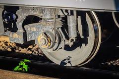 Vecchia ruota d'annata del treno con il piccolo albero sulla ferrovia arrugginita Fotografia Stock