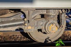 Vecchia ruota d'annata del treno con il piccolo albero sulla ferrovia arrugginita Immagine Stock Libera da Diritti