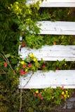 Vecchia scala di legno molto bella circondata da pianta Immagini Stock Libere da Diritti
