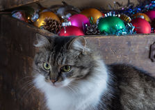 Vecchia scatola con le decorazioni di Natale e un gatto Immagini Stock