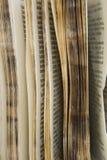 Vecchia serie del dizionario Immagine Stock Libera da Diritti