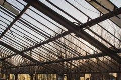 Vecchia serra abbandonata Fotografie Stock Libere da Diritti