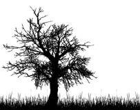 Vecchia siluetta dell'albero Fotografia Stock Libera da Diritti