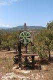 Vecchia stampa delle olive Immagini Stock Libere da Diritti