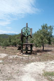 Vecchia stampa delle olive Fotografie Stock Libere da Diritti
