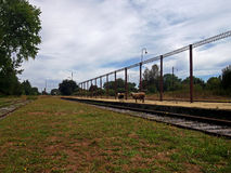 Vecchia stazione ferroviaria con le pecore nel sud del Cile Immagine Stock Libera da Diritti