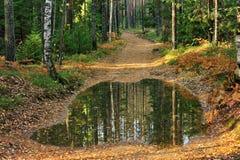 Vecchia strada del suolo con la pozza nella foresta Immagini Stock Libere da Diritti