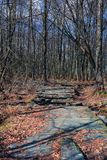 vecchia strada di legno abbandonata attraverso la foresta della molla immagini stock libere da diritti