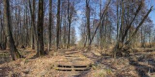 vecchia strada di legno abbandonata attraverso la palude della foresta fotografie stock libere da diritti