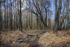 Vecchia strada di legno rotta abbandonata attraverso una palude asciutta della foresta fotografie stock