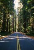 Vecchia strada principale del Redwood Fotografia Stock Libera da Diritti
