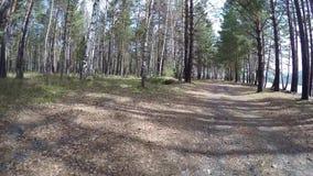 Vecchia strada in un'abetaia Siberia video d archivio