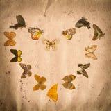 Vecchia struttura del documento del grunge della farfalla Immagine Stock