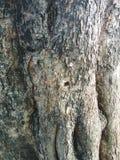Vecchia struttura dell'albero nel giardino fotografia stock