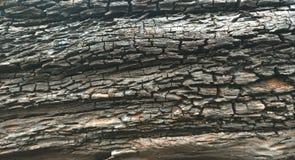 Vecchia struttura della corteccia di albero Immagini Stock Libere da Diritti
