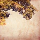 Vecchia carta dell'annata con l'albero Fotografia Stock