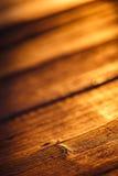 Vecchia struttura di legno alla luce di tramonto Fotografia Stock Libera da Diritti