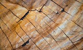 Vecchia struttura di legno degli anelli di albero dell'eucalyptus Immagine Stock Libera da Diritti