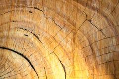 Vecchia struttura di legno degli anelli di albero dell'albero di Nilgiri dell'australiano dell'eucalyptus Fotografie Stock Libere da Diritti