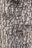 Vecchia struttura di legno dell'albero Immagine Stock Libera da Diritti