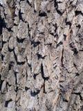 Vecchia struttura di legno dell'albero immagini stock libere da diritti