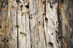 Vecchia struttura di legno obsoleta, fondo, Crimea Fotografia Stock Libera da Diritti